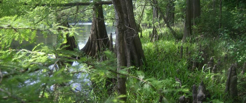 Cypress Swamp at Lower Sabine River